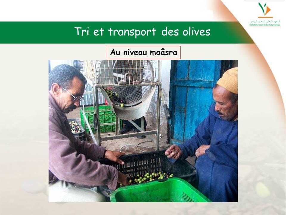 Tri et transport des olives