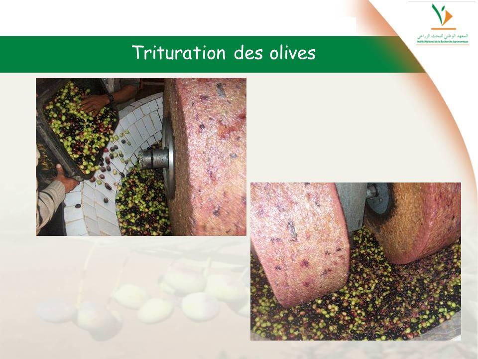 Trituration des olives