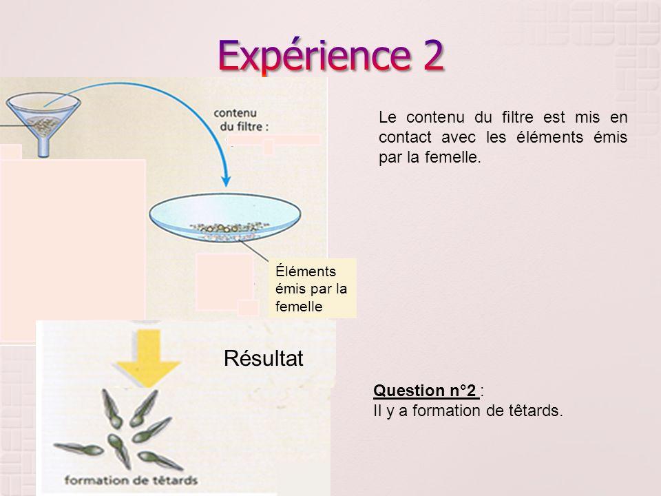 Expérience 2 Le contenu du filtre est mis en contact avec les éléments émis par la femelle. Éléments émis par la femelle.