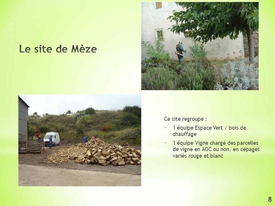Le site de Mèze 8 Ce site regroupe :