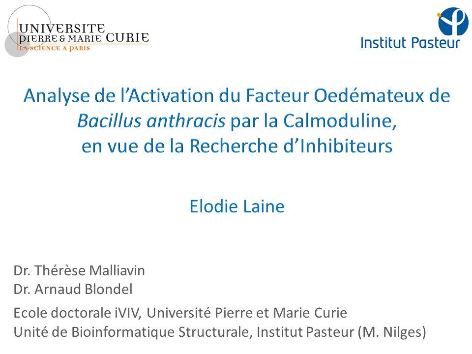 Analyse de l'Activation du Facteur Oedémateux de Bacillus anthracis par la Calmoduline, en vue de la Recherche d'Inhibiteurs