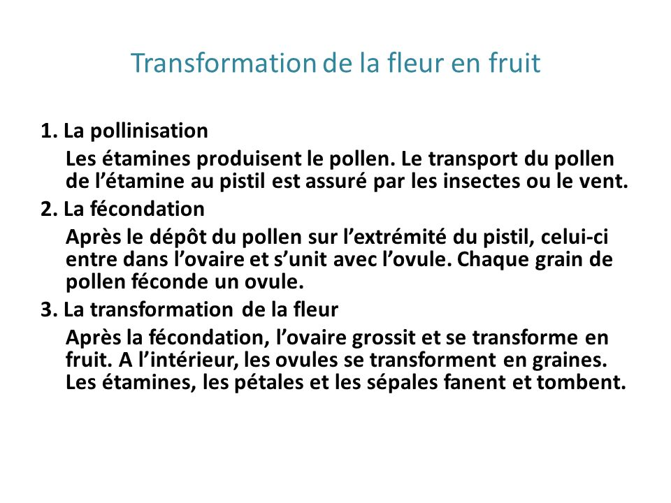 Transformation de la fleur en fruit