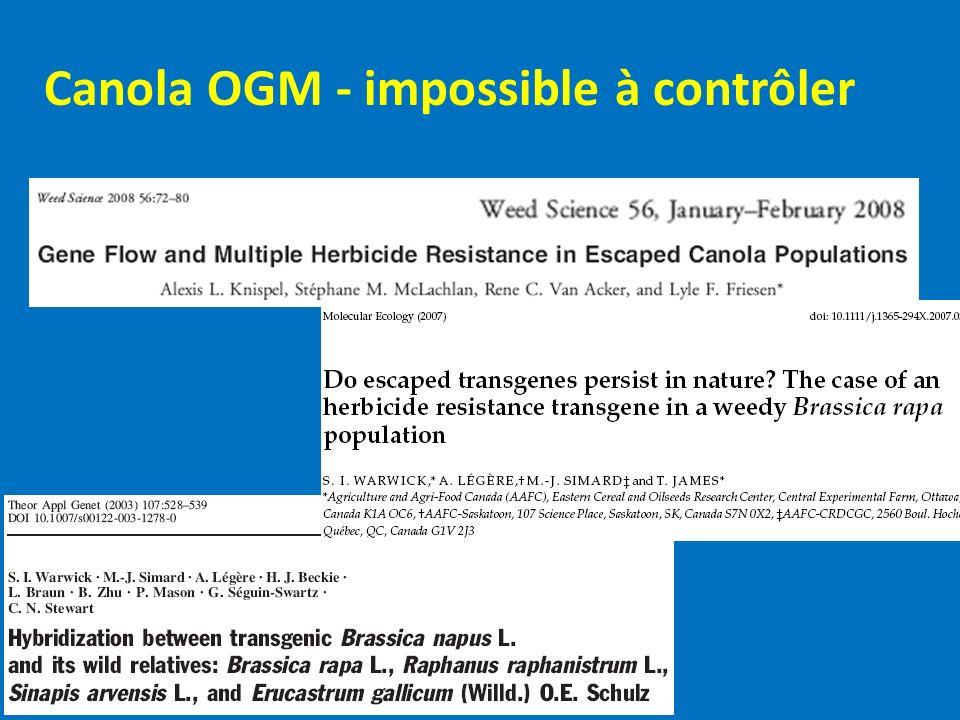 Canola OGM - impossible à contrôler
