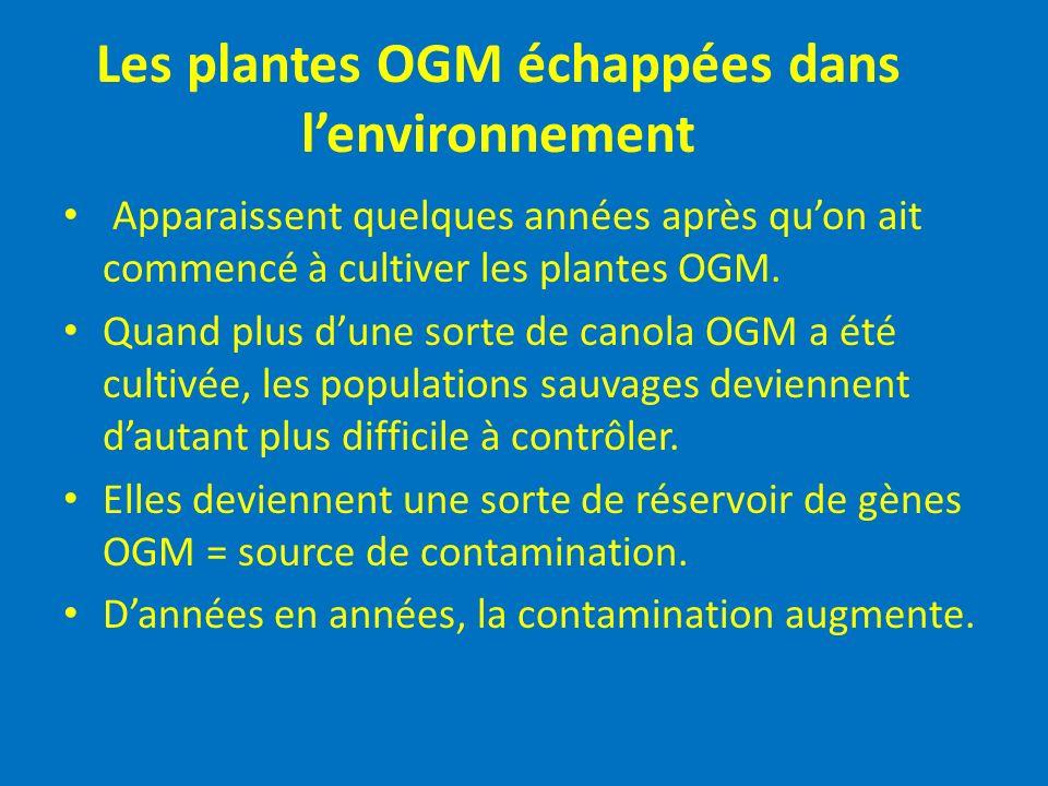 Les plantes OGM échappées dans l'environnement