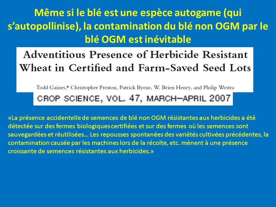 Même si le blé est une espèce autogame (qui s'autopollinise), la contamination du blé non OGM par le blé OGM est inévitable