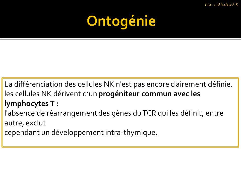 Les cellules NK Ontogénie. La différenciation des cellules NK n est pas encore clairement définie.