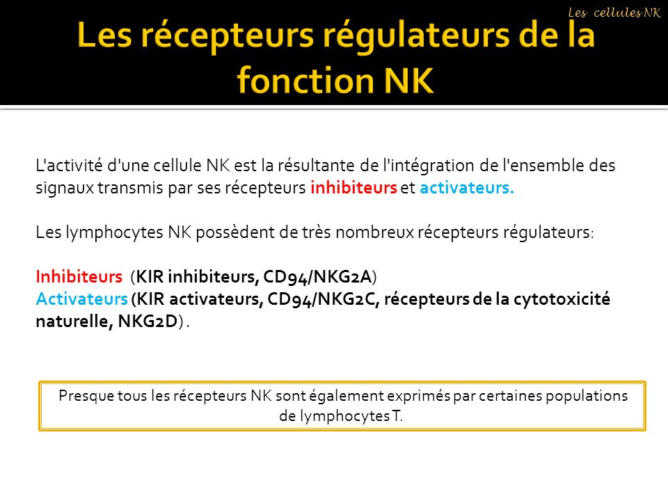 Les récepteurs régulateurs de la fonction NK