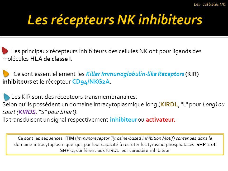 Les récepteurs NK inhibiteurs