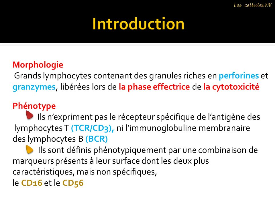 Introduction Morphologie