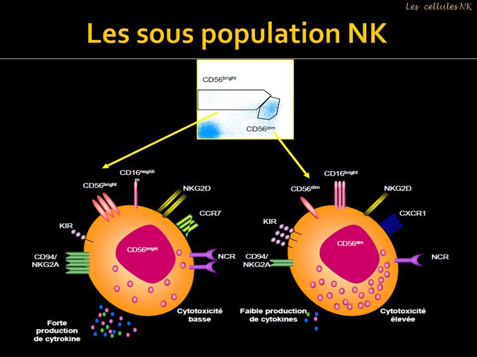 Les cellules NK Les sous population NK