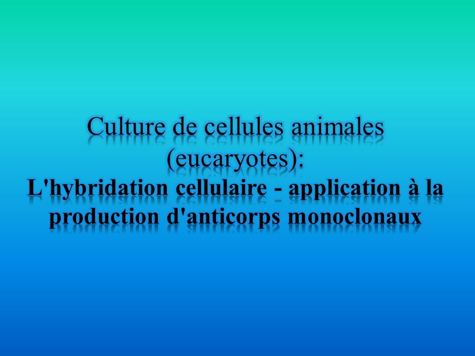 Culture de cellules animales (eucaryotes):