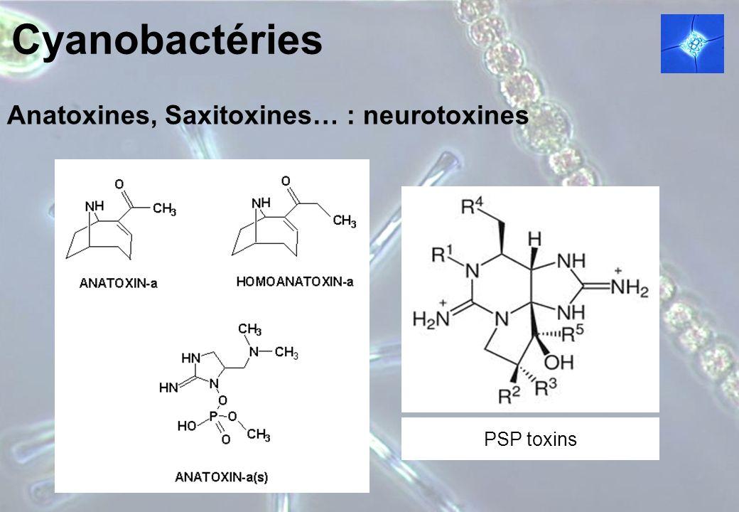 Anatoxines, Saxitoxines… : neurotoxines