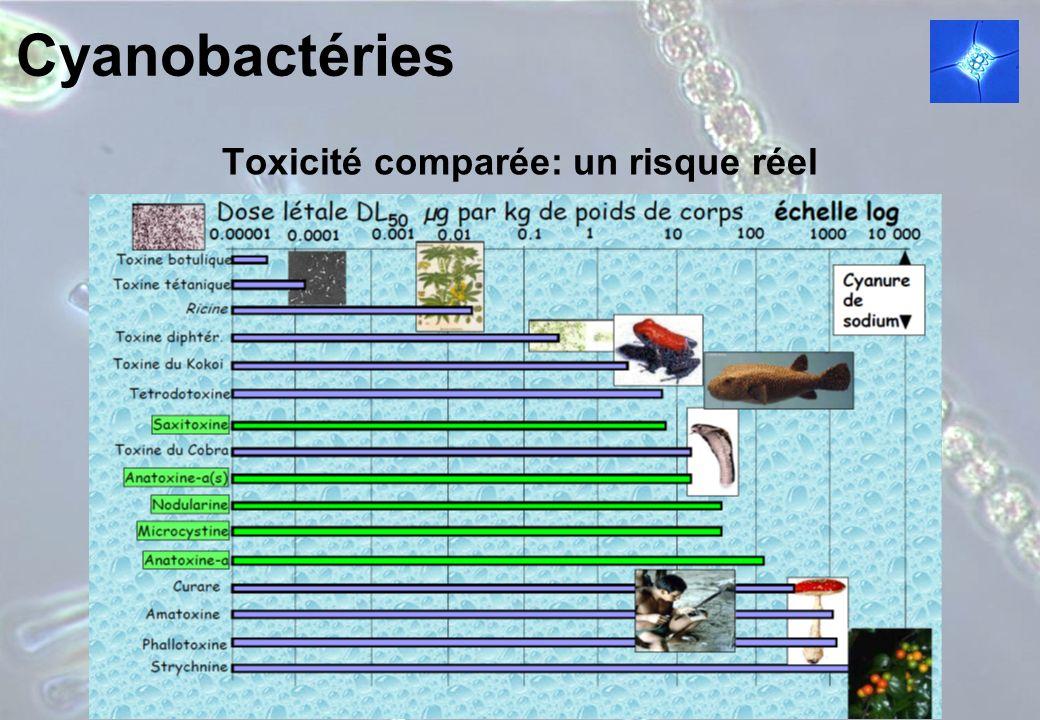 Toxicité comparée: un risque réel