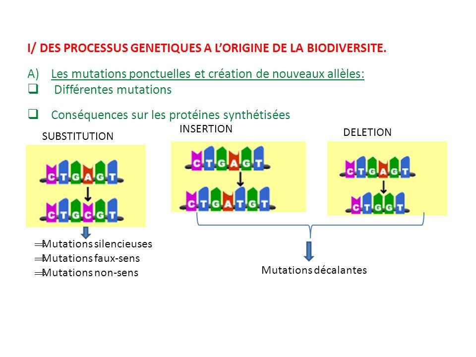 I/ DES PROCESSUS GENETIQUES A L'ORIGINE DE LA BIODIVERSITE.