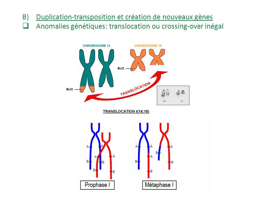 Duplication-transposition et création de nouveaux gènes