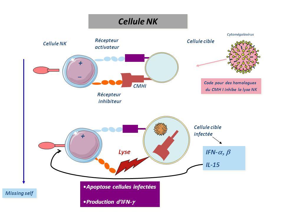 Code pour des homologues du CMH I inhibe la lyse NK