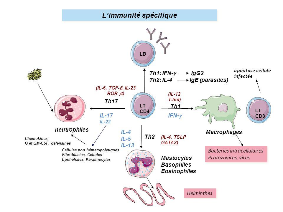 L'immunité spécifique