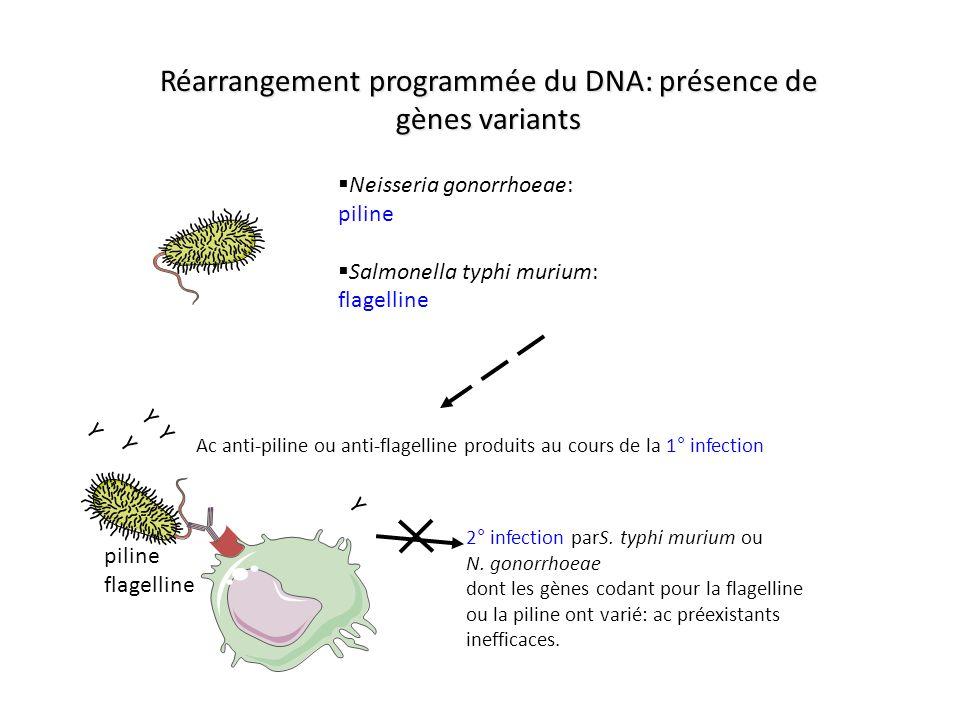 Réarrangement programmée du DNA: présence de gènes variants