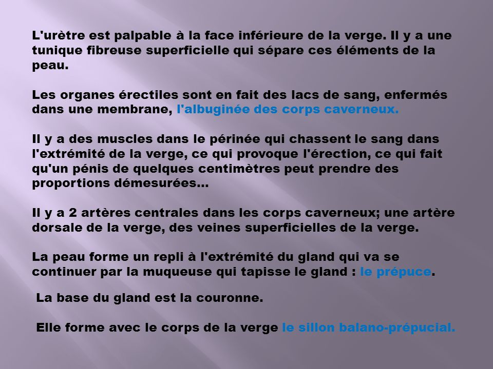 Appareil genital masculin ppt video online t l charger - Peut on mourir en se coupant les veines ...