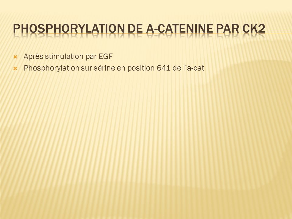 Phosphorylation de a-catenine par ck2