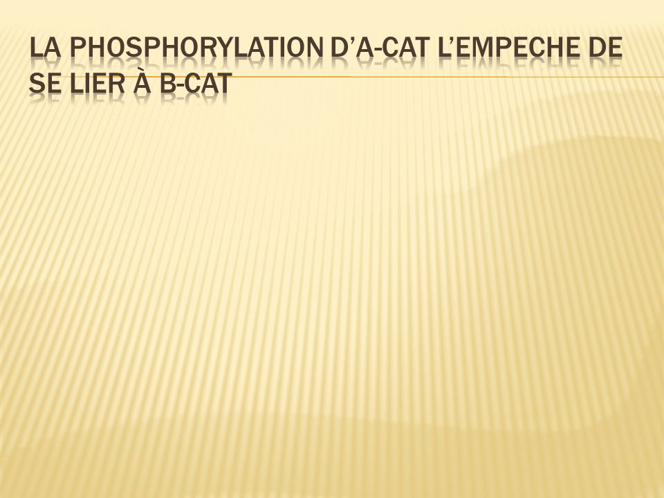 La phosphorylation d'a-cat l'empeche de se lier à b-cat