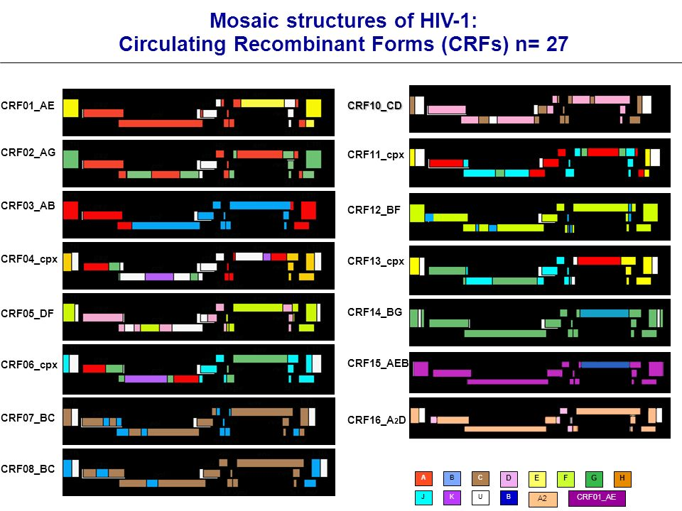 Mosaic structures of HIV-1: Circulating Recombinant Forms (CRFs) n= 27