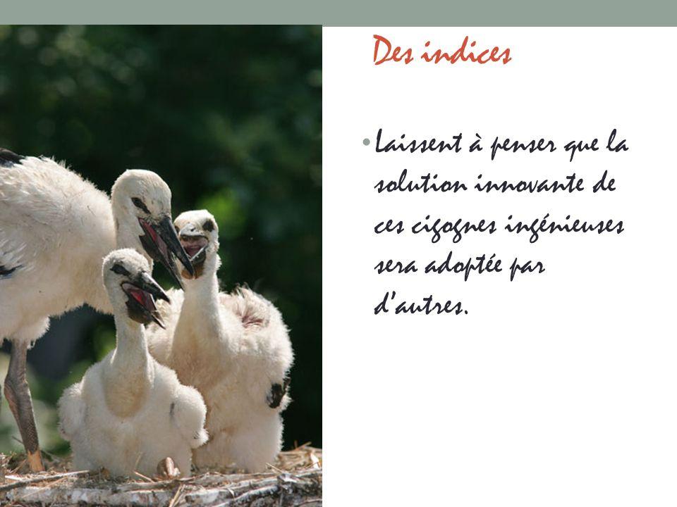 Des indices Laissent à penser que la solution innovante de ces cigognes ingénieuses sera adoptée par d'autres.