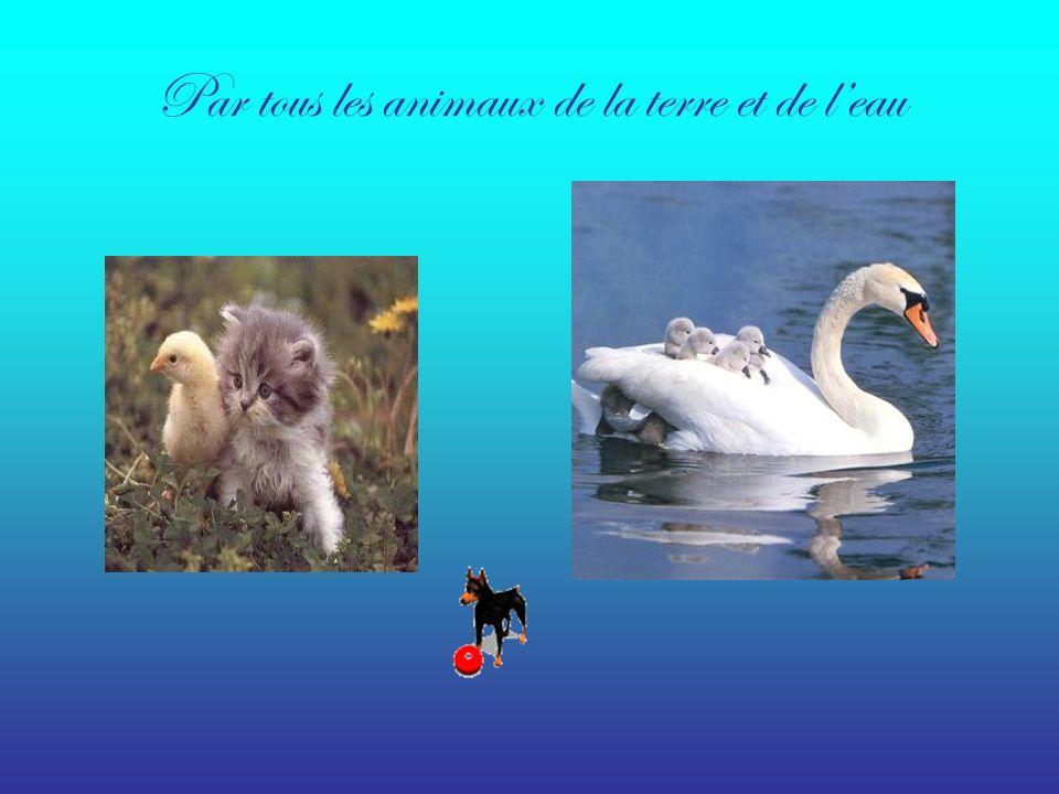 Par tous les animaux de la terre et de l'eau