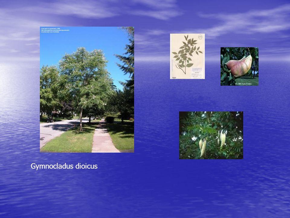 Essences demandées par la Ville de Québec