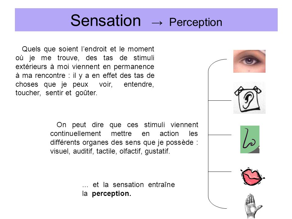 Sensation → Perception
