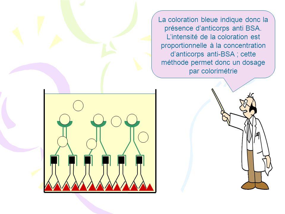 La coloration bleue indique donc la présence d'anticorps anti BSA