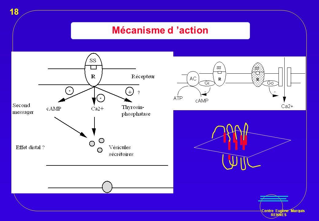 18 Mécanisme d 'action