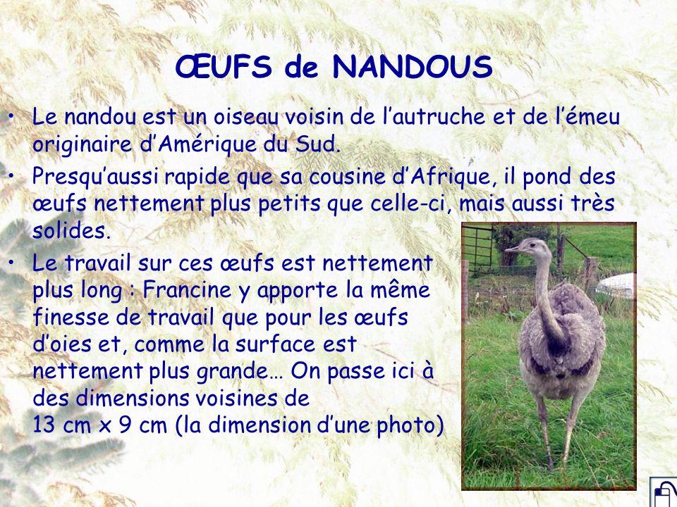 ŒUFS de NANDOUS Le nandou est un oiseau voisin de l'autruche et de l'émeu originaire d'Amérique du Sud.