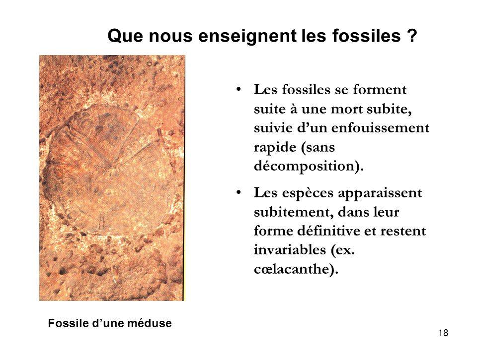 Que nous enseignent les fossiles