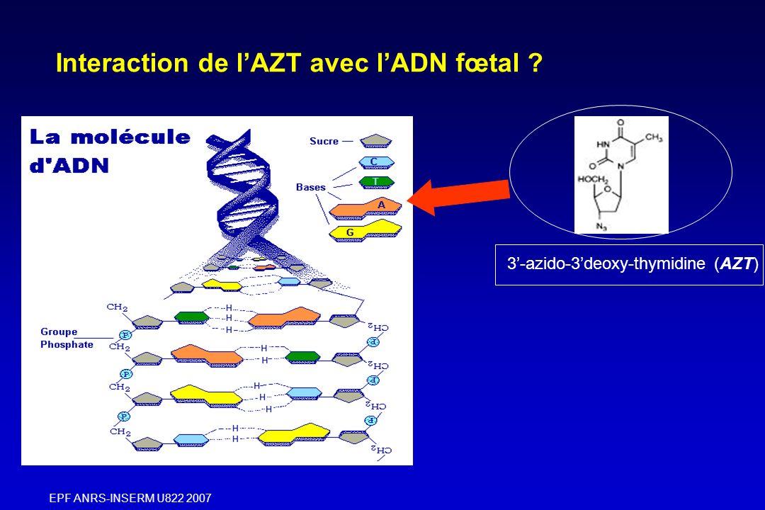 Interaction de l'AZT avec l'ADN fœtal