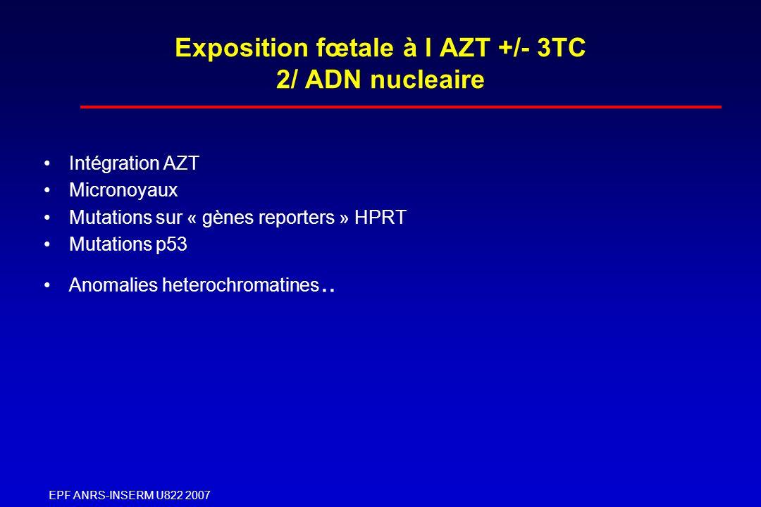 Exposition fœtale à l AZT +/- 3TC 2/ ADN nucleaire