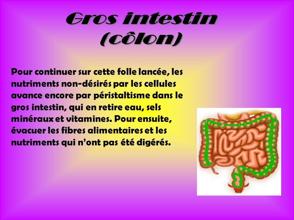 Gros intestin (côlon)