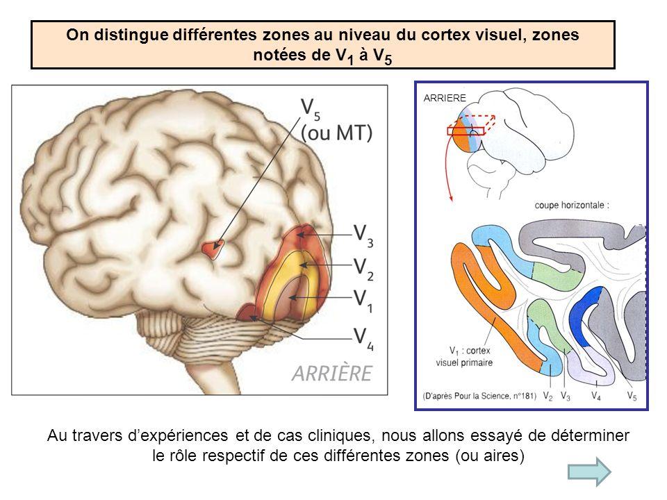 On distingue différentes zones au niveau du cortex visuel, zones notées de V1 à V5