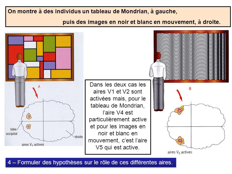 On montre à des individus un tableau de Mondrian, à gauche,