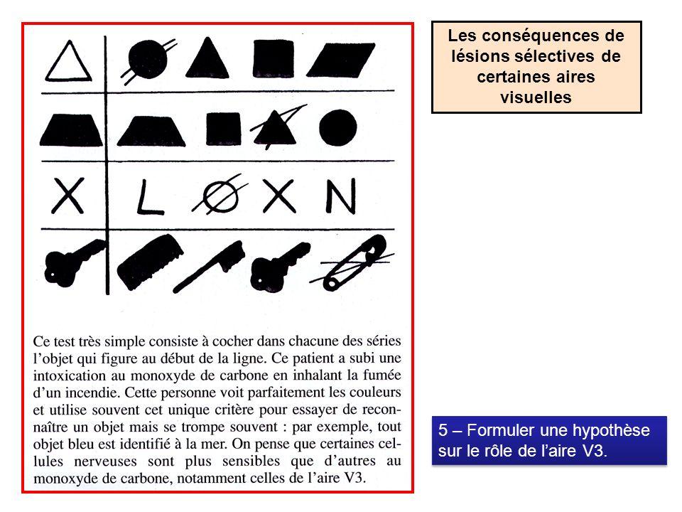 Les conséquences de lésions sélectives de certaines aires visuelles