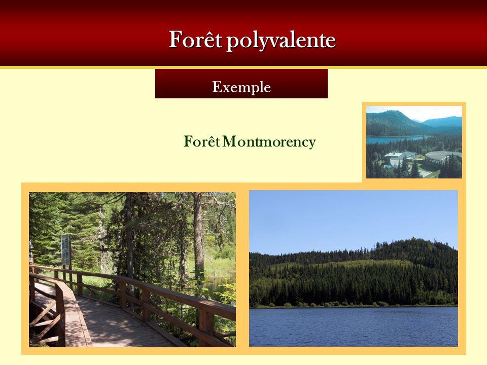 Forêt polyvalente Exemple Forêt Montmorency