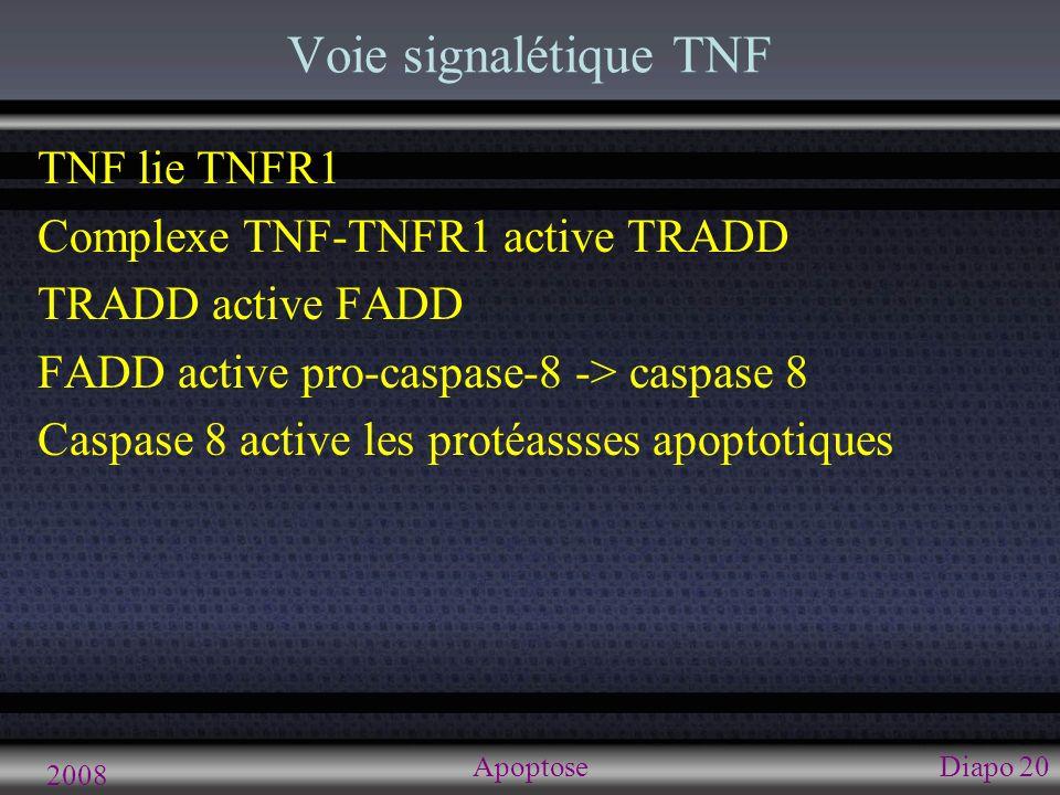 Voie signalétique FAS Apoptose 2008