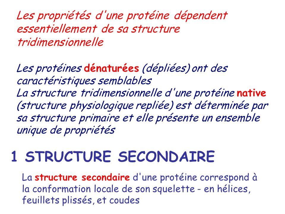Les propriétés d une protéine dépendent essentiellement de sa structure tridimensionnelle