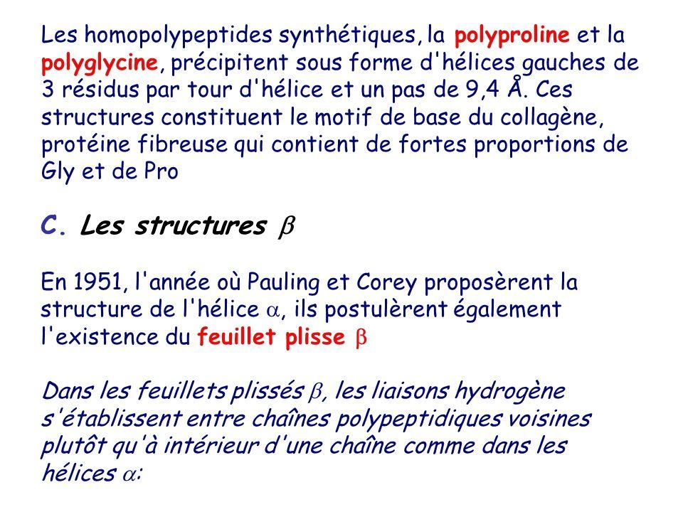 Les homopolypeptides synthétiques, la polyproline et la polyglycine, précipitent sous forme d hélices gauches de 3 résidus par tour d hélice et un pas de 9,4 Å. Ces structures constituent le motif de base du collagène, protéine fibreuse qui contient de fortes proportions de Gly et de Pro