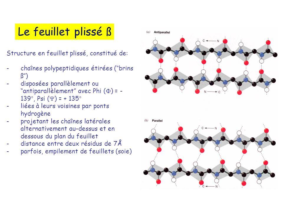 Le feuillet plissé ß Structure en feuillet plissé, constitué de:
