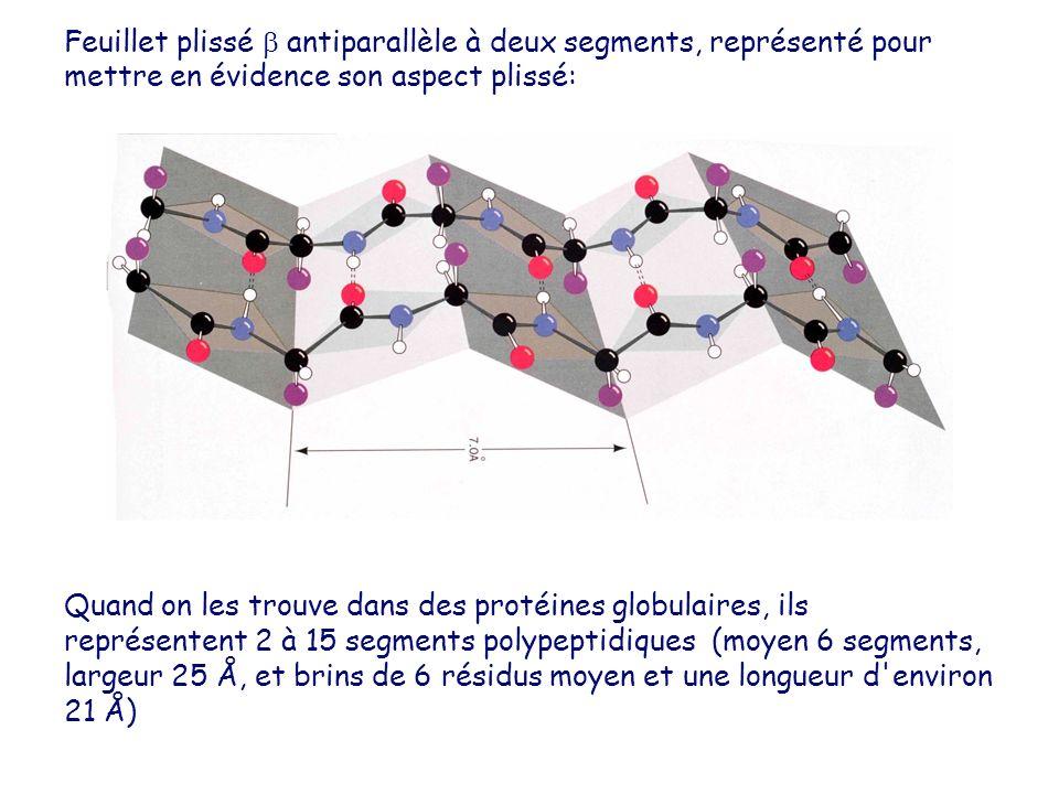 Feuillet plissé  antiparallèle à deux segments, représenté pour mettre en évidence son aspect plissé: