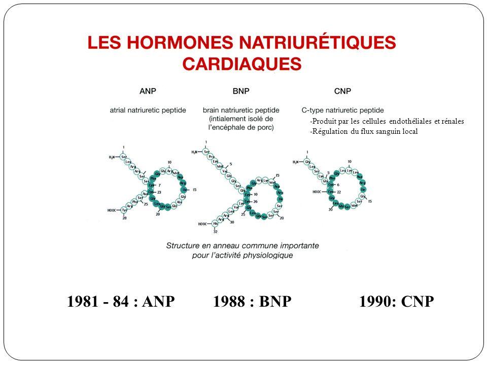 -Produit par les cellules endothéliales et rénales -Régulation du flux sanguin local
