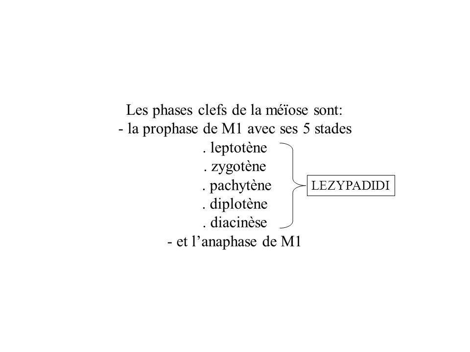 Les phases clefs de la méïose sont:
