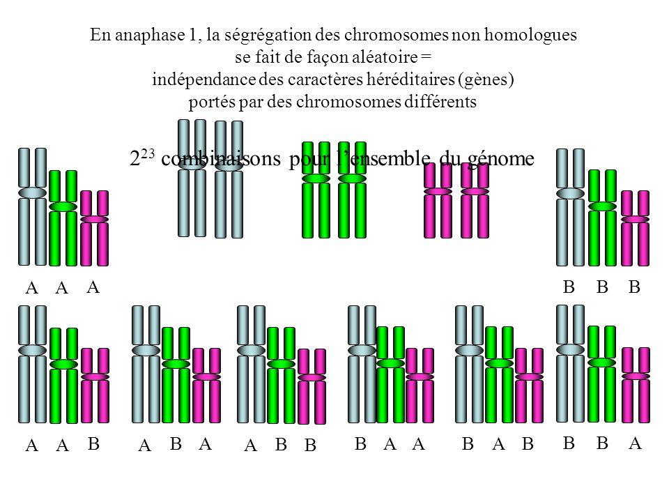 223 combinaisons pour l'ensemble du génome