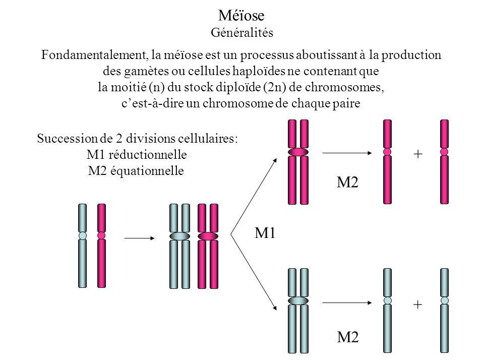Méïose + M2 M1 Généralités